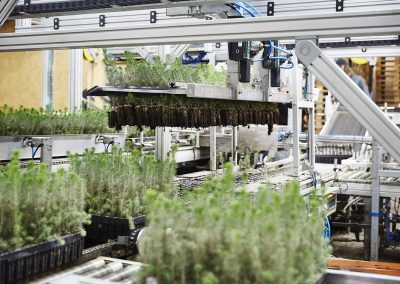 Automatic Plant Packer