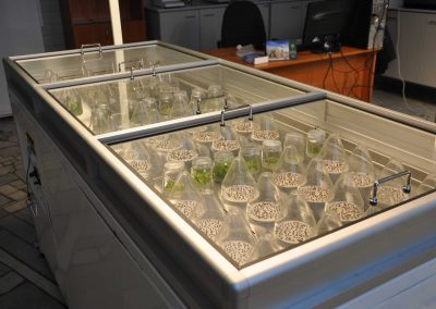 germination table